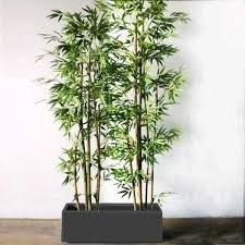 artificial plants in bengaluru, karnataka | fake plant suppliers