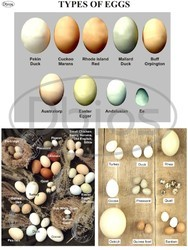 Poultry Charts