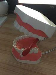 Tooth Brush Model for Demonstration