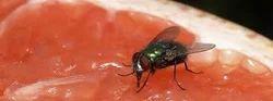 Flies Control Treatment
