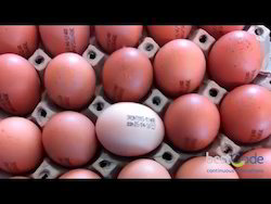 Jet Inks Eggs Printing Ink, Box, Packaging Size: 1 Kg