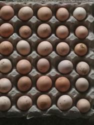 Brown Eggs Desi Anda, Packaging Type: Tray