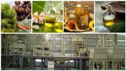 Castor Oil Plant Report