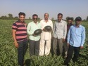 Aruni F-1 Hybrid Watermelon Seeds