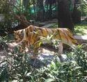 Tiger Statue Fiber