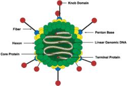Microbiology Models