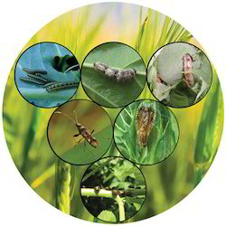 Nano Shield Bio Pesticides