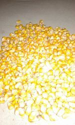Yellow Maiz Grain