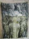 Modal Printed Shawls