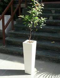 Quantum Planter