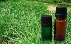 Cymbopogon Winterianus Oil
