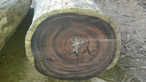 Rose Wood Logs Manufacturer From Dandeli