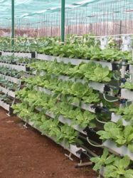Vertical Farming Service