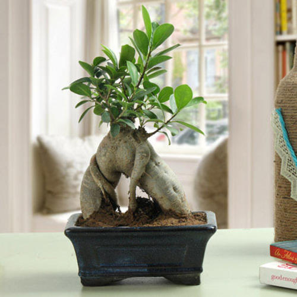 7875b0215 Bonsai Plants
