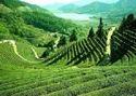 Assam-shillong-meghalaya - Arunachal Tour