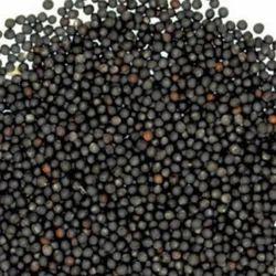 Tiger Black Sortex Mustard Seed, Packaging: PP Bags