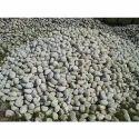 Limestone Pebbles Stone