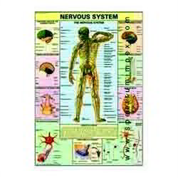 HP04S-Nervous System