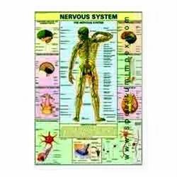 HP04S-Nervous System