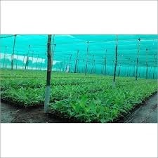 Nursery Plants Equipments And