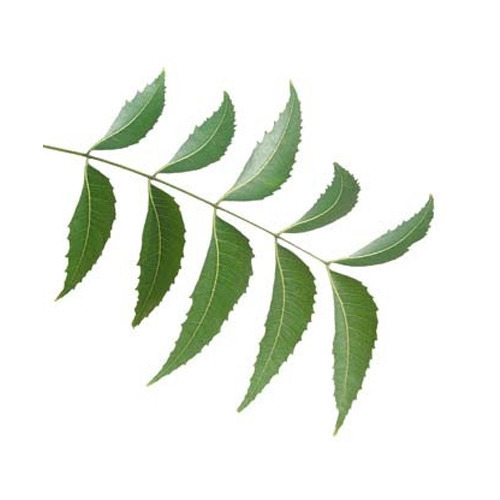 Can neem leaves be used