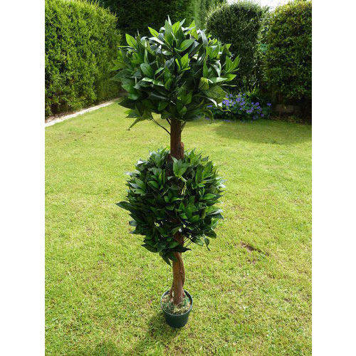 the home uk ornamental for trees gardens decorative inspirations decor small yard