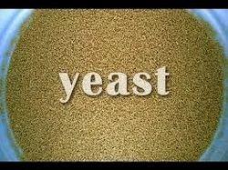 Molasses dry yeast, Packaging Type: Bag, Packaging Size: Bulk in 25 Kg Bags