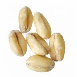 White Winter Wheat