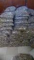 Moringa Seeds PKM-1 Variety