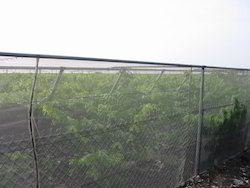 Greenhouse Insect Nets