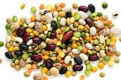 Indian Organic Pulses, No Genetic Engineering