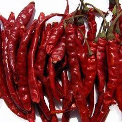 Hot Teja Chilli Pepper
