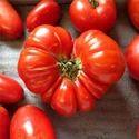 Celery Tomato