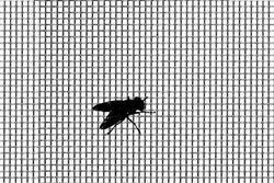 Plastic Mosquito Mesh