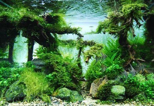 Aquarium Accessory At Rs 50 Pack S मछल घर क सह यक उपकरण एक व र यम एक स सर A S Pet Kingdom Nagpur Id 7720587391