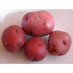 Lady Rosetta Potato