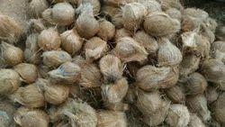 Fresh Pollachi Coconut