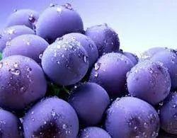 Fresh Blueberries, Imported Fruits | Fruit Weekly Market
