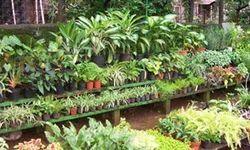 Garden Center Square Umbrella Table Umbrella Resort Umbrella Center Pole Umbrella Wood Patio Umbrella In Santacruz E Mumbai Suraj Nursery Id 11303910173