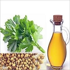 Image result for coriander oil
