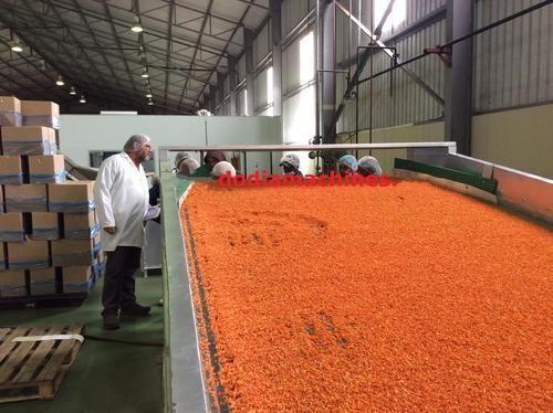 Carrot Dehydration Plant