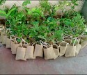 Jute Tree Gift Bags
