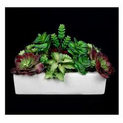 Succulent Plant (SPG-01)