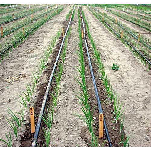 Vegetable Drip Irrigation System Manufacturer From Thane