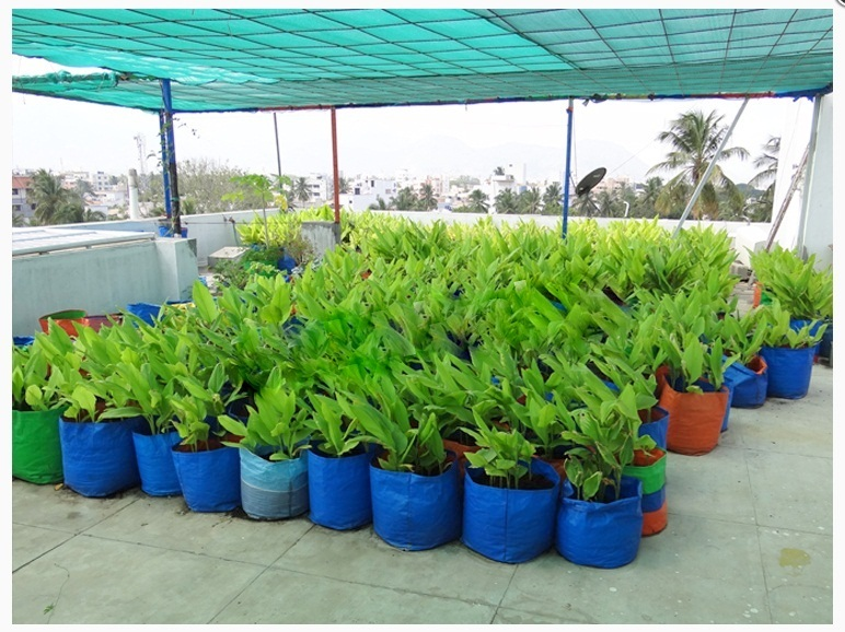 Rooftop Gardening Kit At Rs 1751 Unit Chennai Id 11199980973