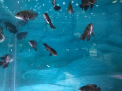 Oscars Fish