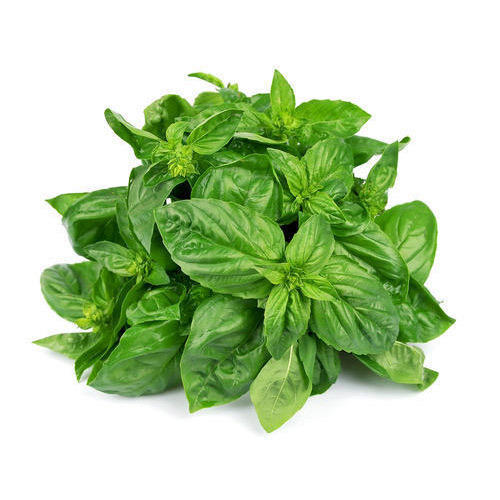 Image result for BASIL LEAVES