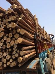 10-20 feet Natural Nilgiri Wooden Logs, Diameter: 2-4 inch