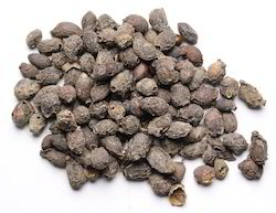 Eugenia Jambolana (Jamun) Extract Powder