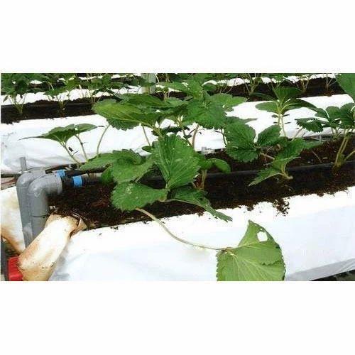 Greenhouse Grow Bags